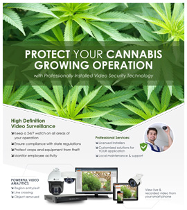 Cannabis Growing Operation Security Solutions